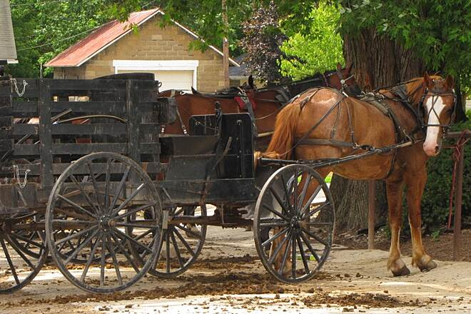 Holmes County Trail Holmes County Trail Amish Cart in Fredericksburg