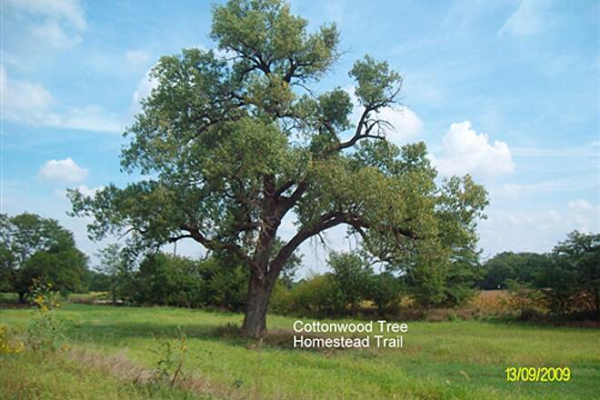 Homestead Trail Homestead Corridor Trail Lone Cottonwood Tree