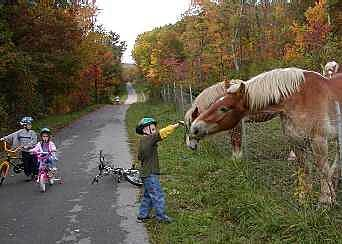 Huckleberry Trail Friendly Clydesdales Along the Huckleberry Trail in October 2002