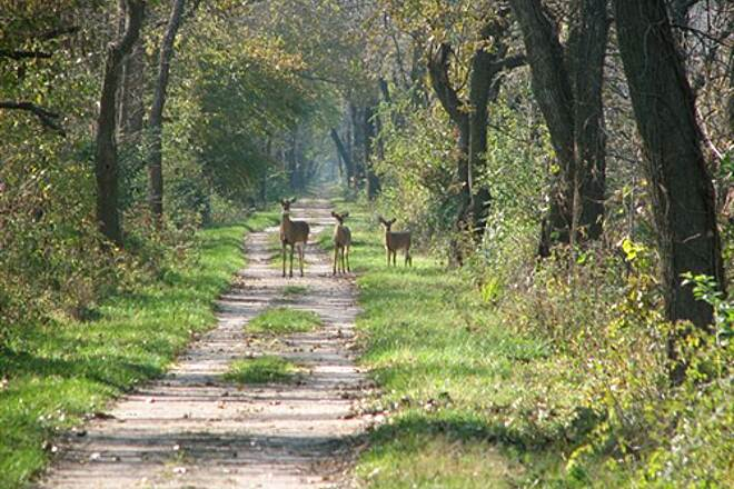 Illinois & Michigan Canal State Trail Three Deer Four miles East of Morris, IL  October 31, 2008