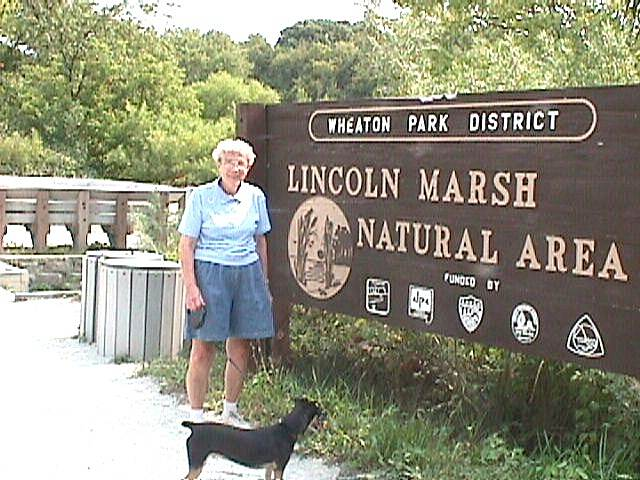 Illinois Prairie Path Nature Preserve This is the Lincoln Marsh Nature Preserve along the Weaton-Elgin trail.