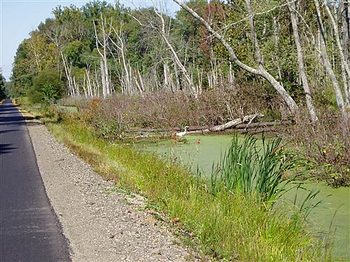 Indian Head Rail Trail Swamps along the Indian Head Trail  Crane flys along the trail