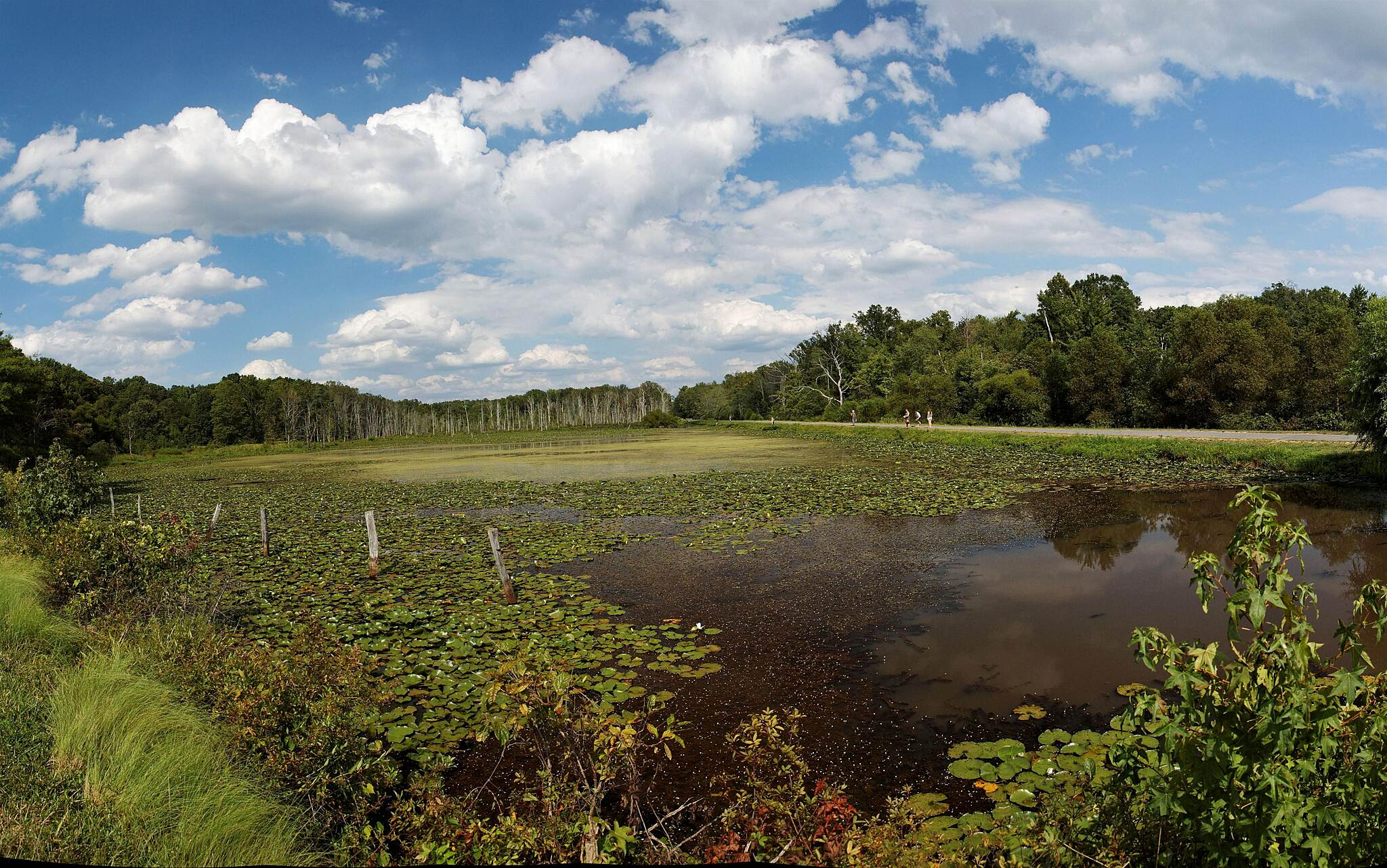 Indian Head Rail Trail Panorama Swamp Scene