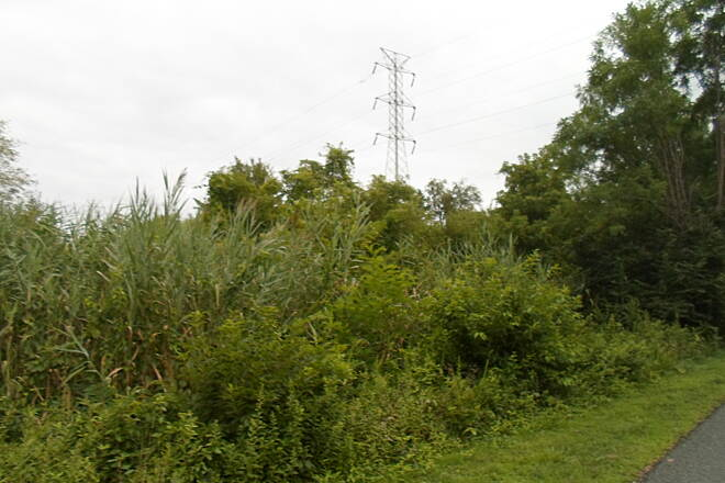 Industrial Track Greenway Trail New Castle Industrial Track Swampy woodlands on the north end of New Castle.