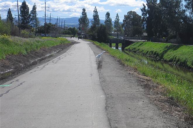 Iron Horse Regional Trail Spring on Iron Horse Trail Egret on trail, canal on right, SP rail grade to left