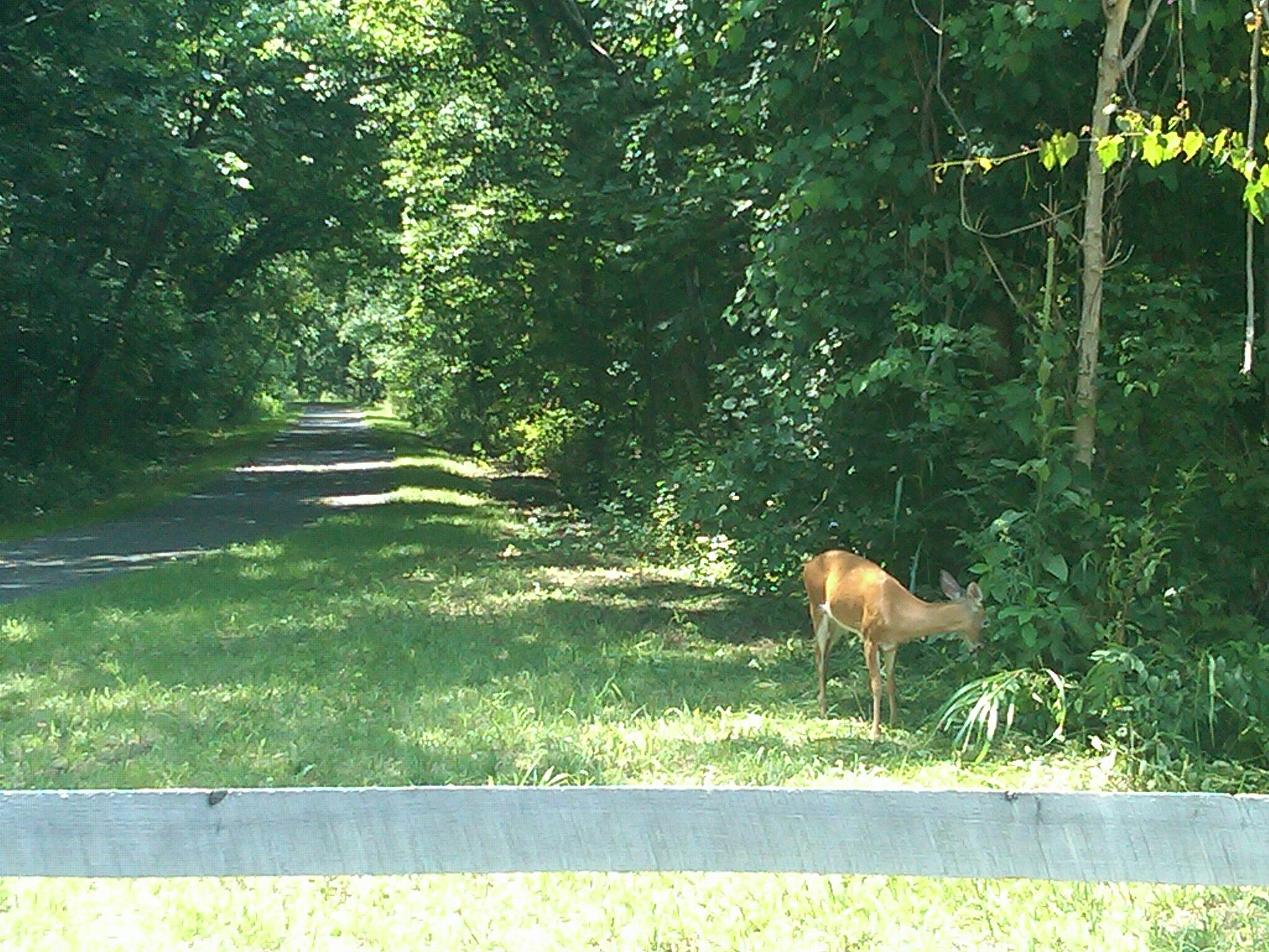 Jackson River Scenic Trail Deer on the Jackson River Scenic Trail 3