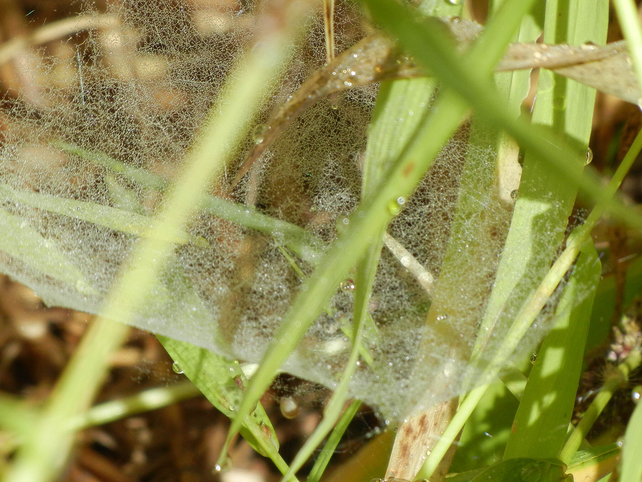 Jackson River Scenic Trail Spider Wed A little spider web along the Jackson River Scenic Trail