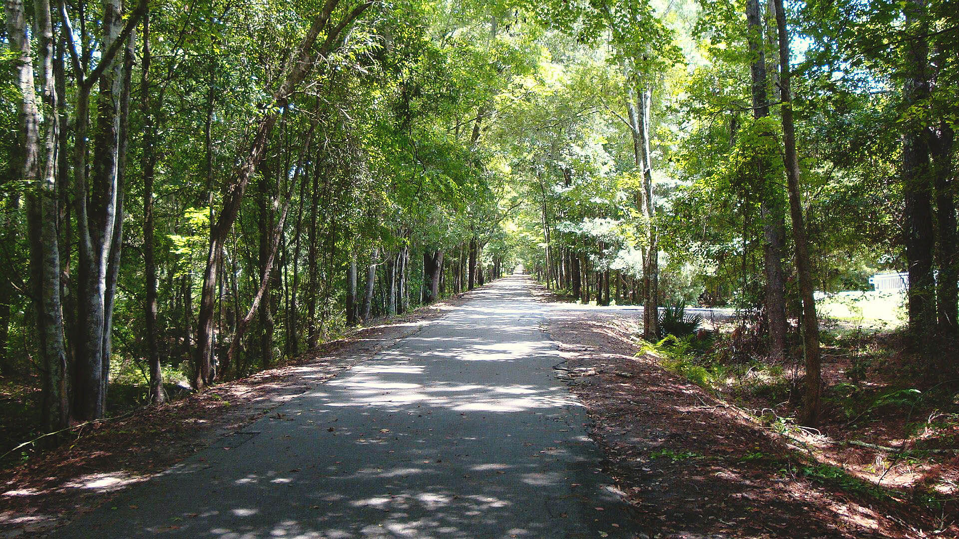 Jacksonville-Baldwin Rail-Trail Jacksonville-Baldwin Rail-Trai Photo submitted by: opbiker