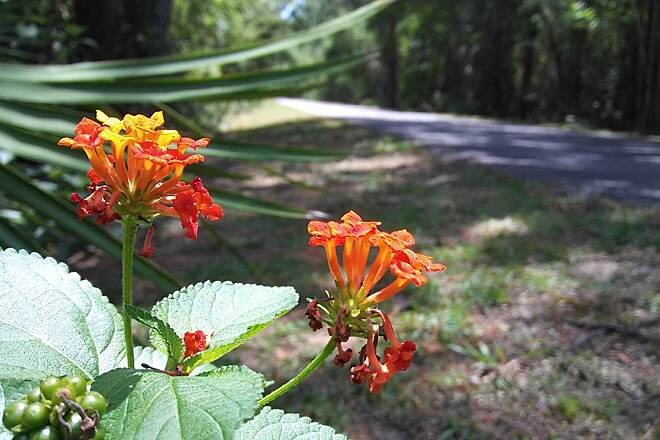 Jacksonville-Baldwin Rail-Trail Summer colors Beauty can be found all along the trail