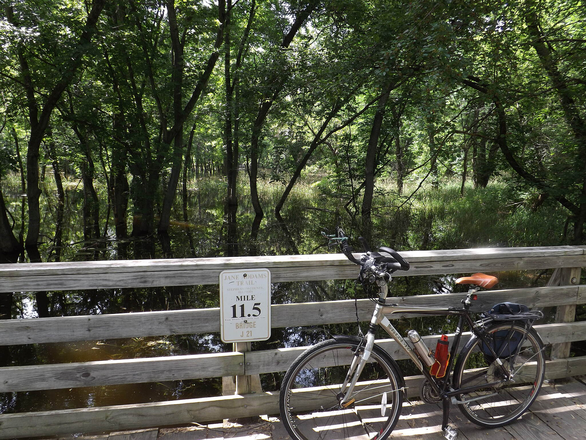 Jane Addams Trail Flooded Forest We've had a lot of rain this spring and summer and the Pecatonica River is quite high.