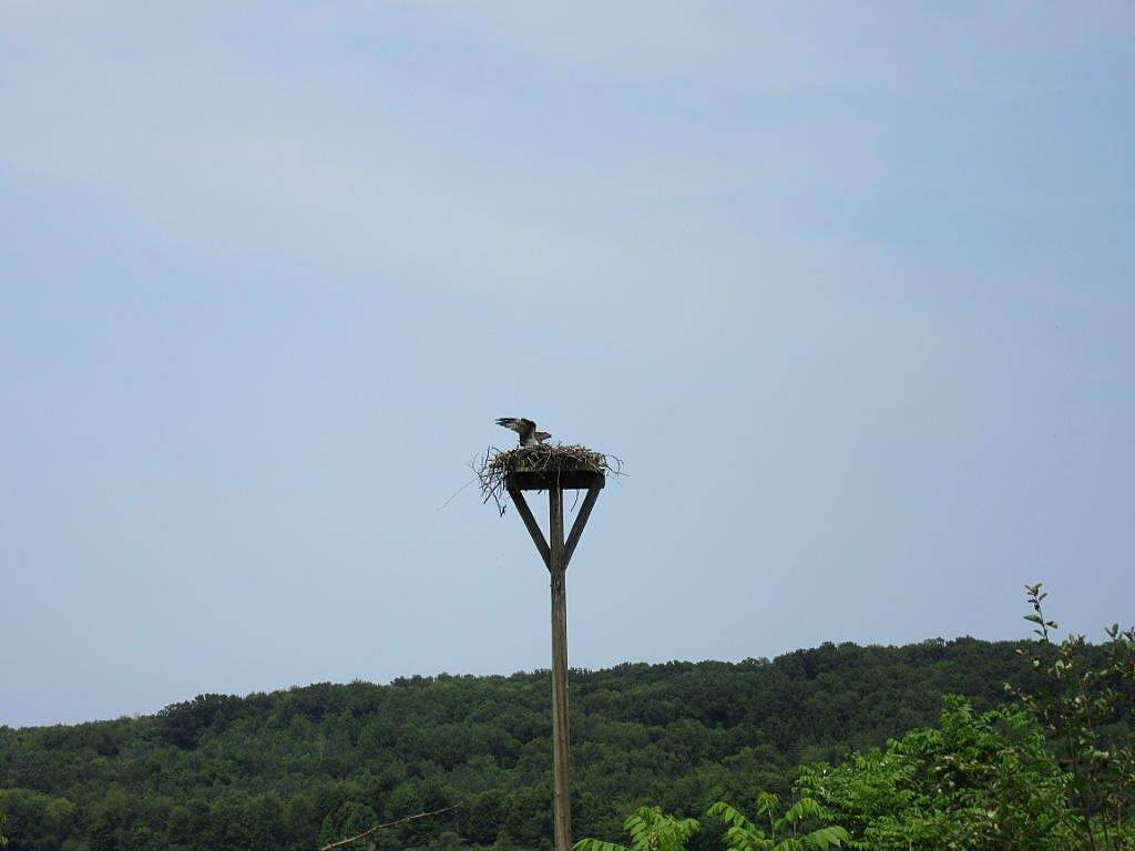John C. Oliver Multi-Purpose Loop Trail Osprey Nest Osprey Nest along the trail-July 2015