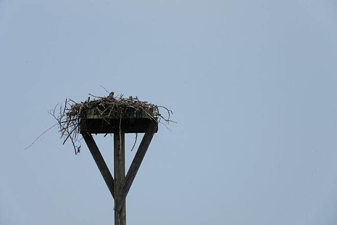 John C. Oliver Multi-Purpose Loop Trail Osprey-July 2015 Osprey in the nest along the trail