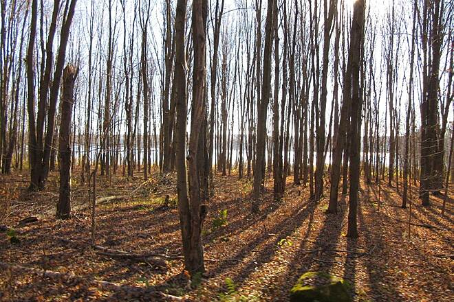 John C. Oliver Multi-Purpose Loop Trail Along the trail In the summer you cannot see the lake from the trail but you can in the Fall and Winter.