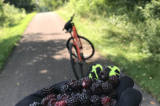 John C. Oliver Multi-Purpose Loop Trail John C. Oliver Trail Finds Biking and Berries: A common pair on the John C. Oliver Multi-Purpose Loop Trail.