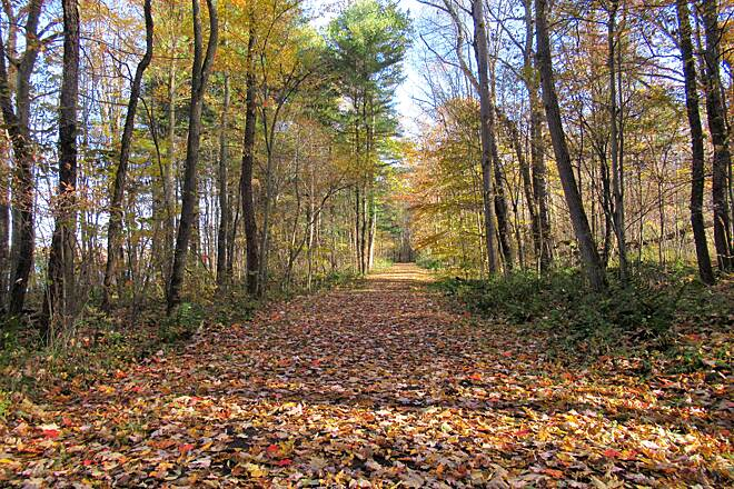 John C. Oliver Multi-Purpose Loop Trail Trail covered in leaves-Fall, 2018 Along the John C. Oliver Multipurpose trail just a few miles in and from the Marina.