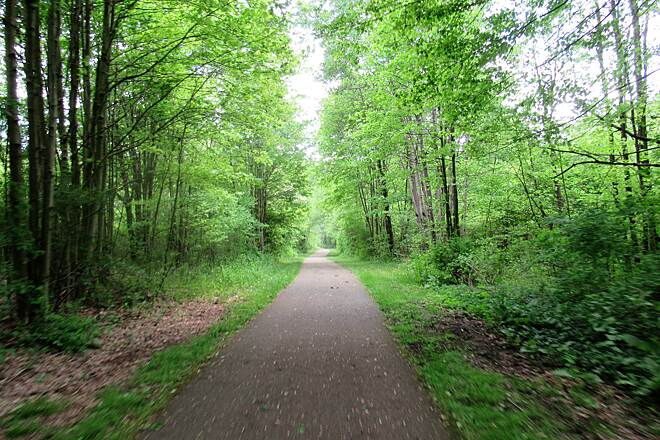 John C. Oliver Multi-Purpose Loop Trail So green! May, 2019:  Everything is so green!