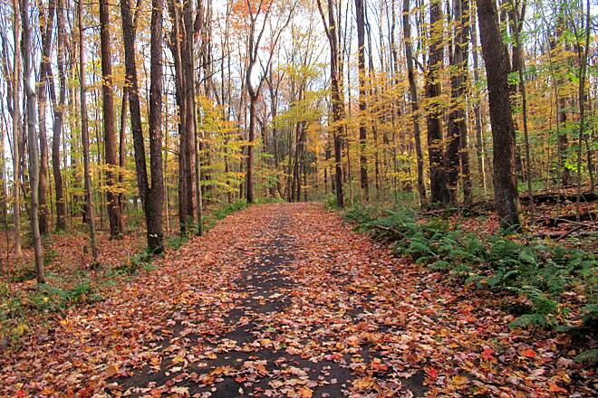 John C. Oliver Multi-Purpose Loop Trail Pretty Yellow  Pretty leaves on the trees-October, 2019.