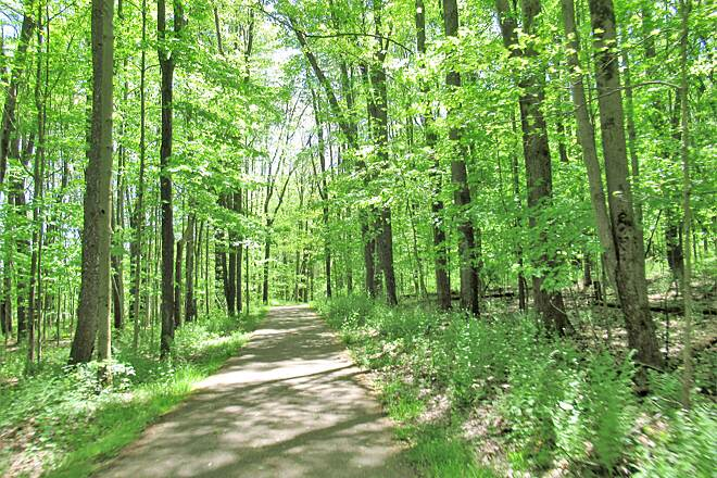 John C. Oliver Multi-Purpose Loop Trail End of May 2020  Spring has sprung and it's so green!