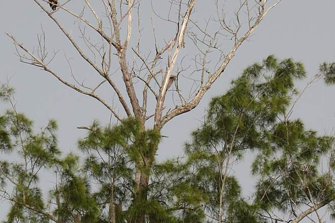 John Yarbrough Linear Park Trail Bald Eagles You'll see many types of birds along the trail. On the day we were there, we spotted a pair of bald eagles in the tree tops!