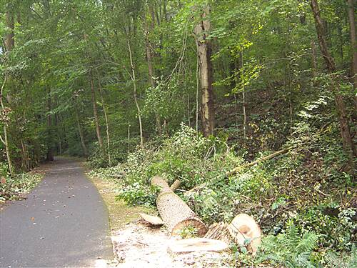 Jonathan Eshenour Memorial Trail Jonathan Eshenour Memorial Trail Damage from Hurricane Irene - taken Labor Day, 2011. Tropical storm Lee, which hit about a week later, may have done even greater damage. This portion of the trail is currently closed.