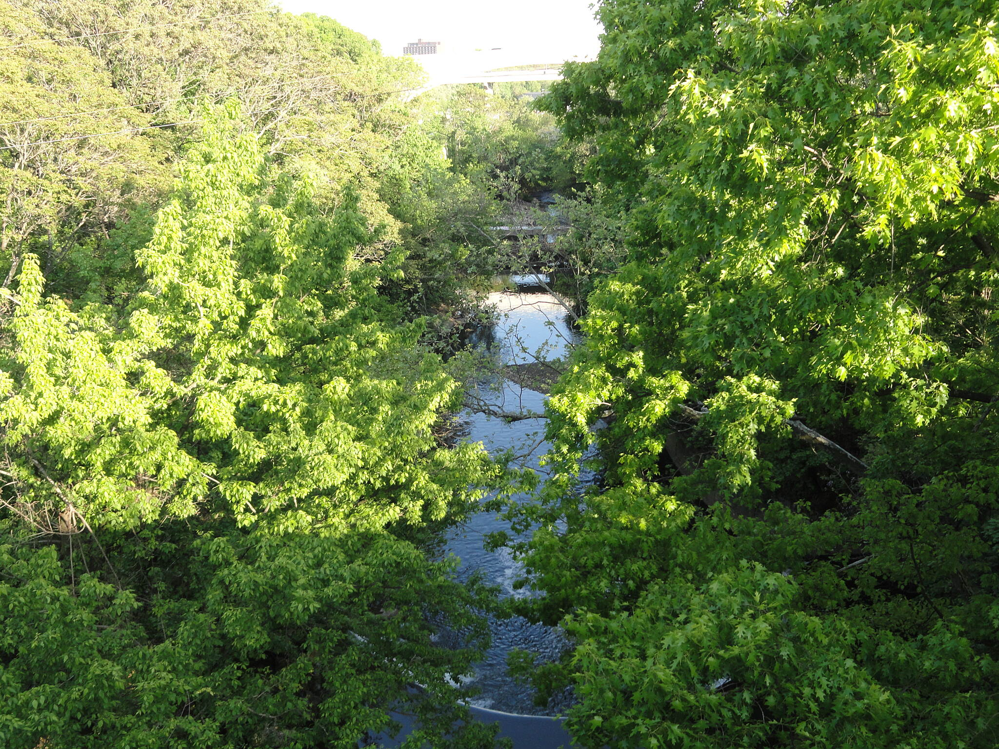 Jones Falls Trail View of the Jones Falls from the Jones Falls Trail Vista from Jones Falls Trail overlooking the stream.  This is a popular spot for night herons.
