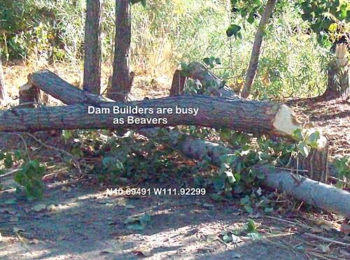 Jordan River Parkway Trail Jordan River Parkway Dam Builders busy as Beavers