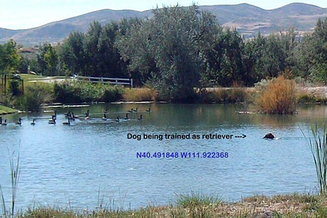 Jordan River Parkway Trail A Fowl Picture Retriver Dog being Trained