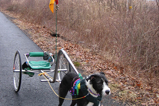 Joseph B. Clarke Rail Trail Dudley drives on the trail This is my dog Dudley hitched to our dog sulky.  I also call it his Exercise Machine.  We go driving for fun and fitness.
