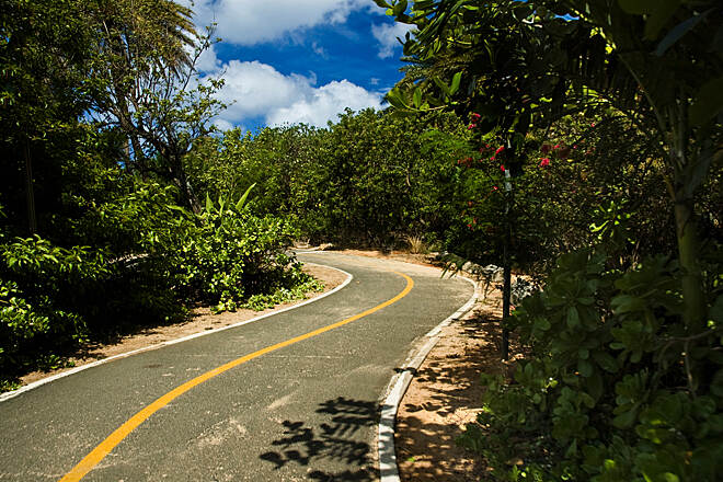 Ke Ala Pupukea Bike Path Along the path From Sunset Beach going into the shaded section of our bike path