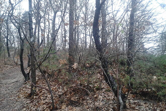 Kings Park Hike & Bike Trail Upper bluff lot 2