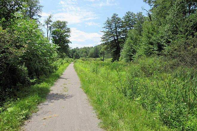 Kinzua Valley Trail Open area of the trial-July, 2017 Along the trail, open area. July, 2017