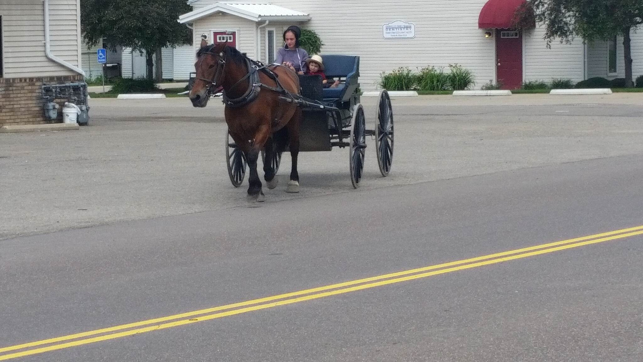 Kokosing Gap Trail Danville saw this Amish buggy from restaurant in Danville at E end of trail