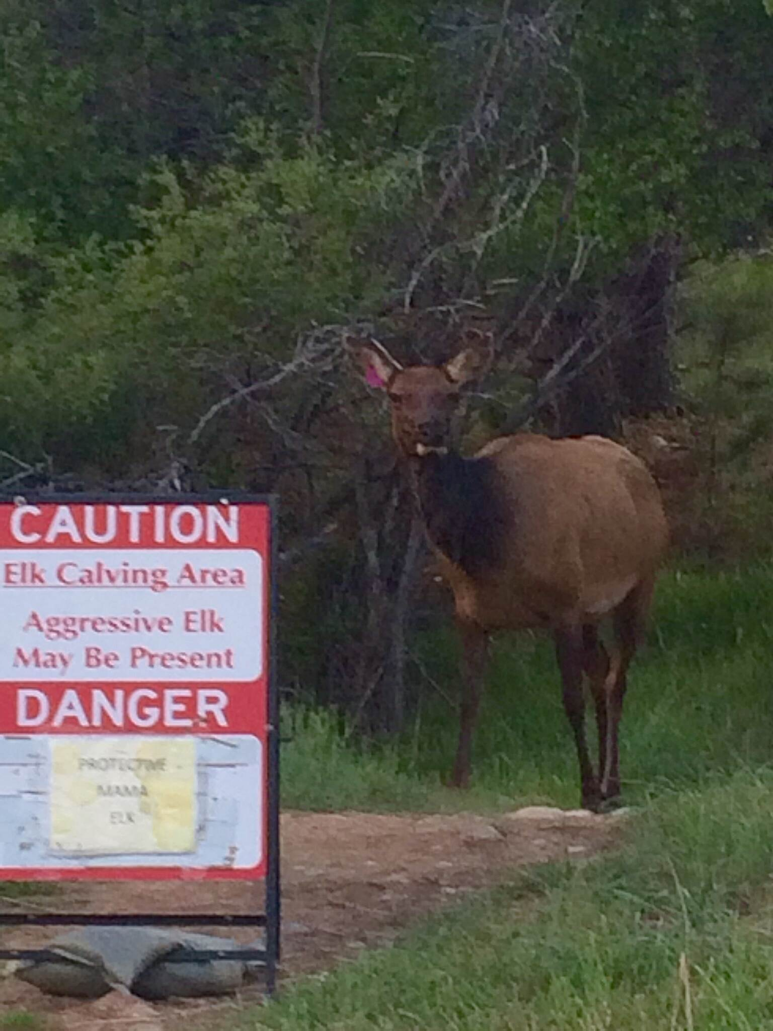 Lake Estes Trail watch out for the elk momas