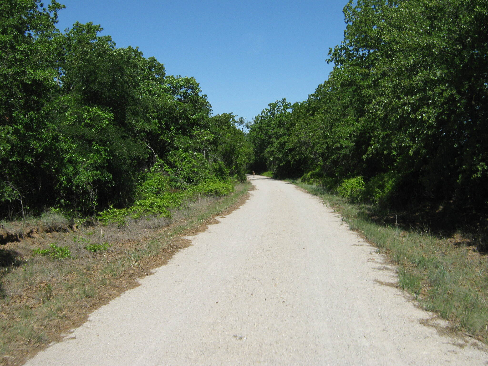 Lake Mineral Wells State Trailway Lake Mineral Wells Trailway Deer on the trail!!