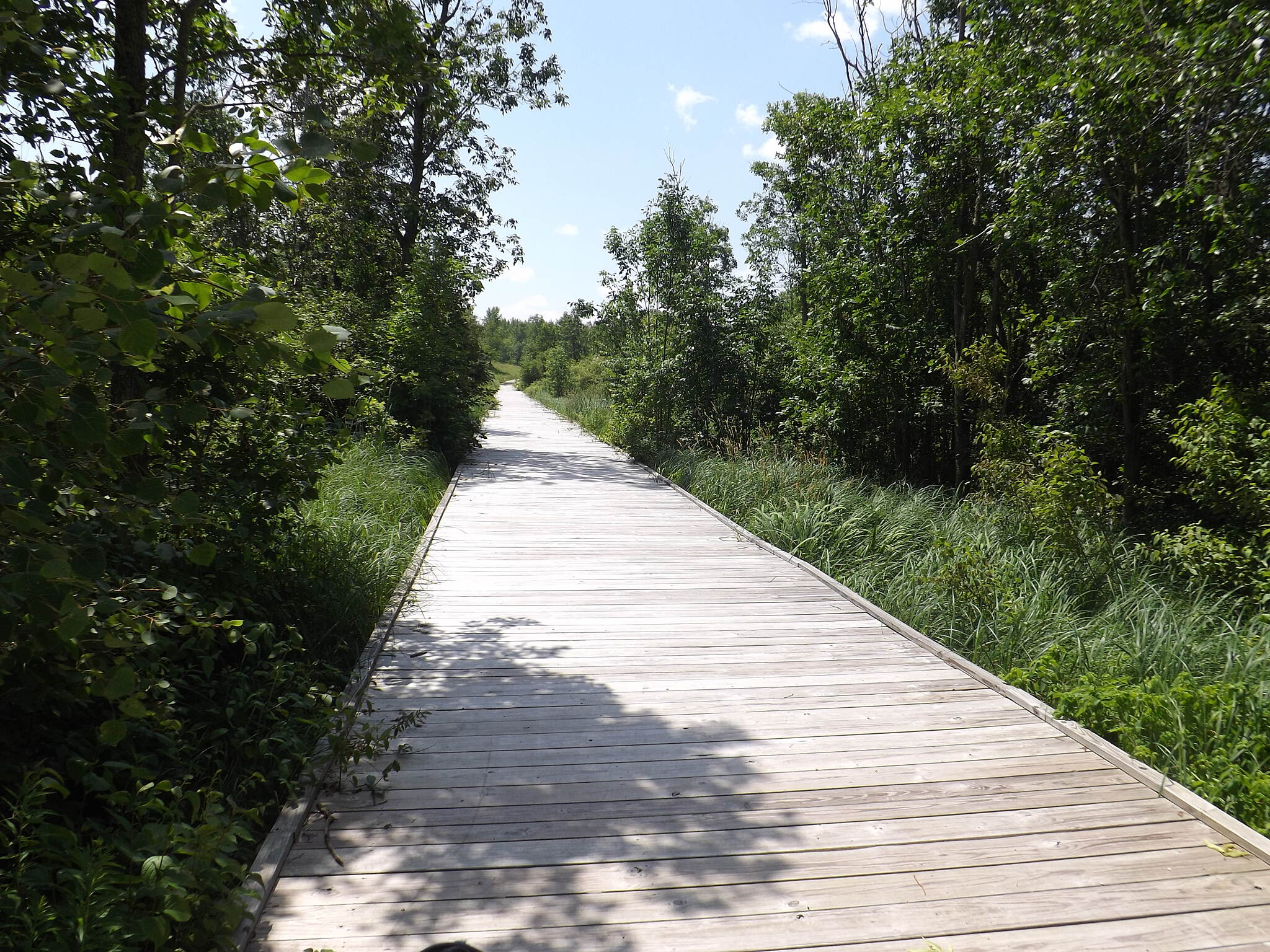 Lake to Lake Bike Trail (WI) Crossing A Marsh At one point, the Lake to Lake trail changes from crushed rock to a wood as a boardwalk takes you over a marsh.