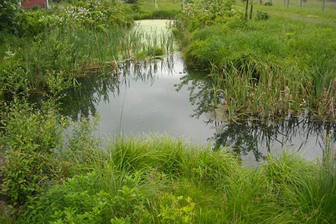 Landsdown Trail Frog Pond at Myers Property Site A 'croaking' frog pond in the shadow of the cleaned-up EPA Myers Property Site, along the Landsdown Trail