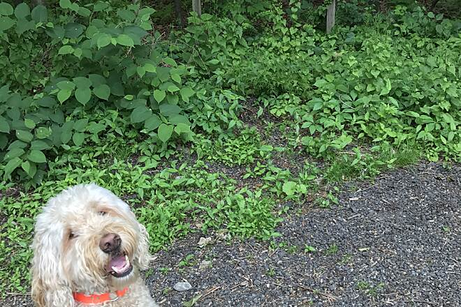 Larkin State Park Trail Run with a bud Calloway ¿¿ The labradoodle, 5 y.o. Run with a bud. Two is always better than one ¿¿¿¿¿¿