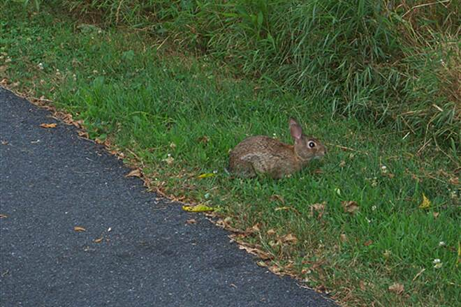Lebanon Valley Rail-Trail Lebanon Valley Rail Trail Another pic of the Lebanon trail bunny - taken July 24, 2011.