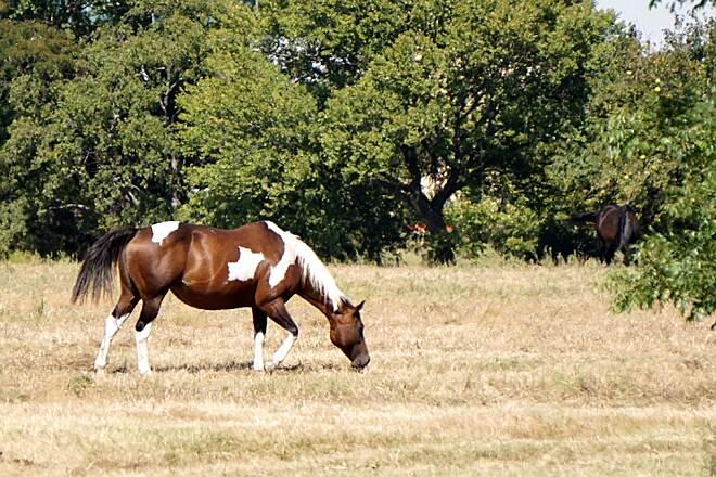 Legacy Trail (TX) Just Grazing  There are horses along the part of the trail near Children's Medical Center.
