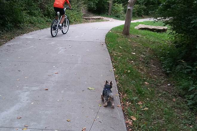Line Creek Trail Walking my dog Walking my dog North of 68th St. on Line Creek Trail, he wanted to meet the biker.