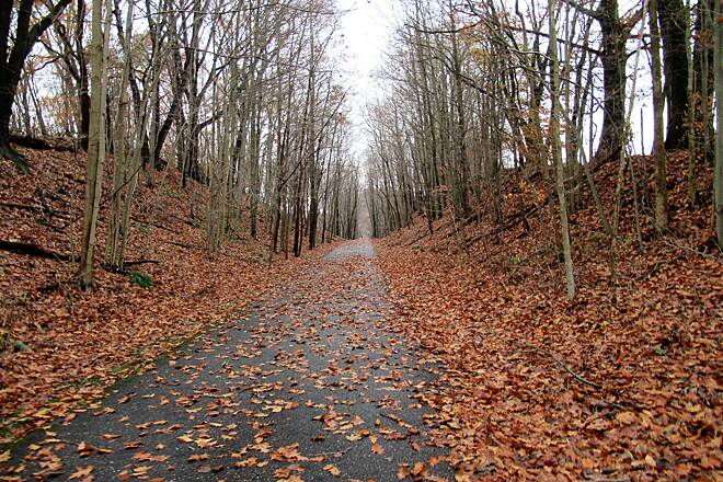 Little Beaver Creek Greenway Trail Fall on the trail Leaves on the trail-November 2018