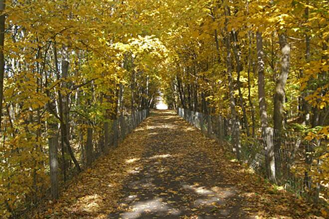 Little Beaver Creek Greenway Trail Wow! What color! A Temple of Yellow Leaves Surround you at almost all Times
