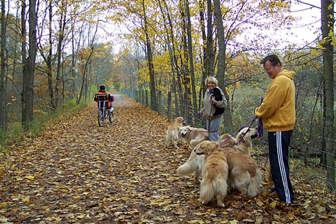 Little Beaver Creek Greenway Trail 5 Golden Retrievers Enjoying A Golden Fall Day On The Trail 5 Golden Retrievers Enjoying A Golden Fall Day On The Trail
