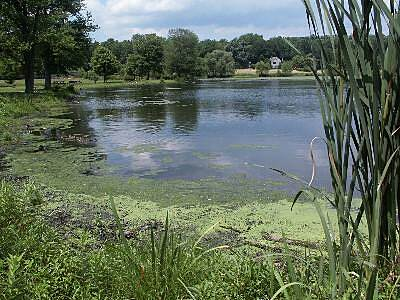 Loantaka Brook Reservation Trail Loantaka Pond The trail as it passes Loantaka pond. A picnic area and a parking area located here.