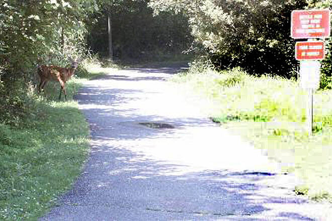 Loantaka Brook Reservation Trail Deer Crossing Deer crossing the trail.  Along this trail, we noticed alot of deer in the woods.
