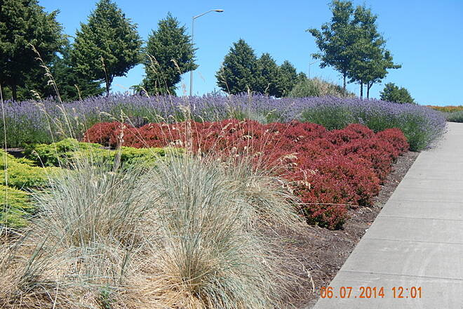 Lombard Street Path Landscaping More Beautiful plants 6 Jul 2014
