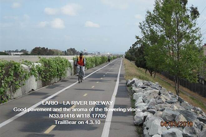 Los Angeles River Trail LARIO - LA River Bikeway Section You can smell the flowering vines here.