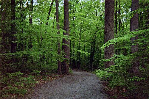 MA & PA Heritage Trail Ma & Pa Heritage Trail Winding through the woods on a spring day. Taken May 2012.
