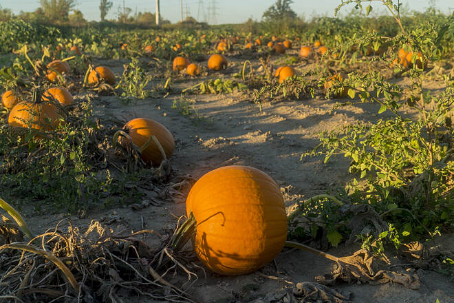 Macomb Orchard Trail Pumpkin Patch An evening bike ride along the Macomb Orchard Rail Trial revealed this Autumnal scene. Pumpkins a-glow in the evening sun, near Washington Township Michigan. It beckoned me to snap a pic...