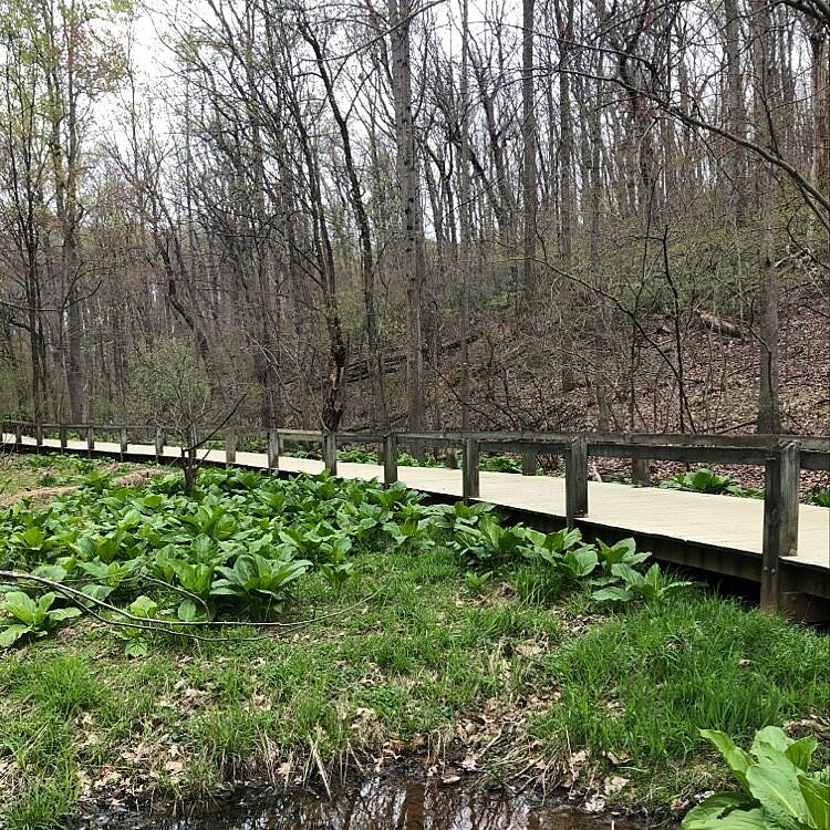 Magruder Branch Trail  Nature path for walking and biking